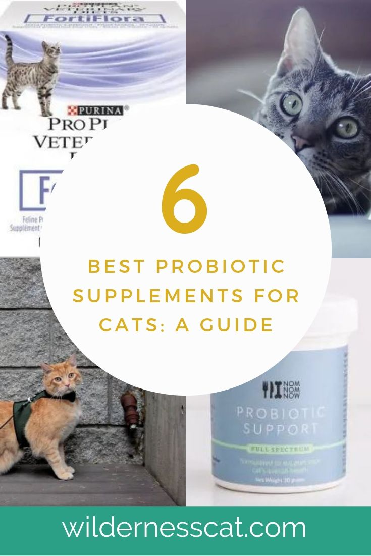Best probiotics for cats pinnable image