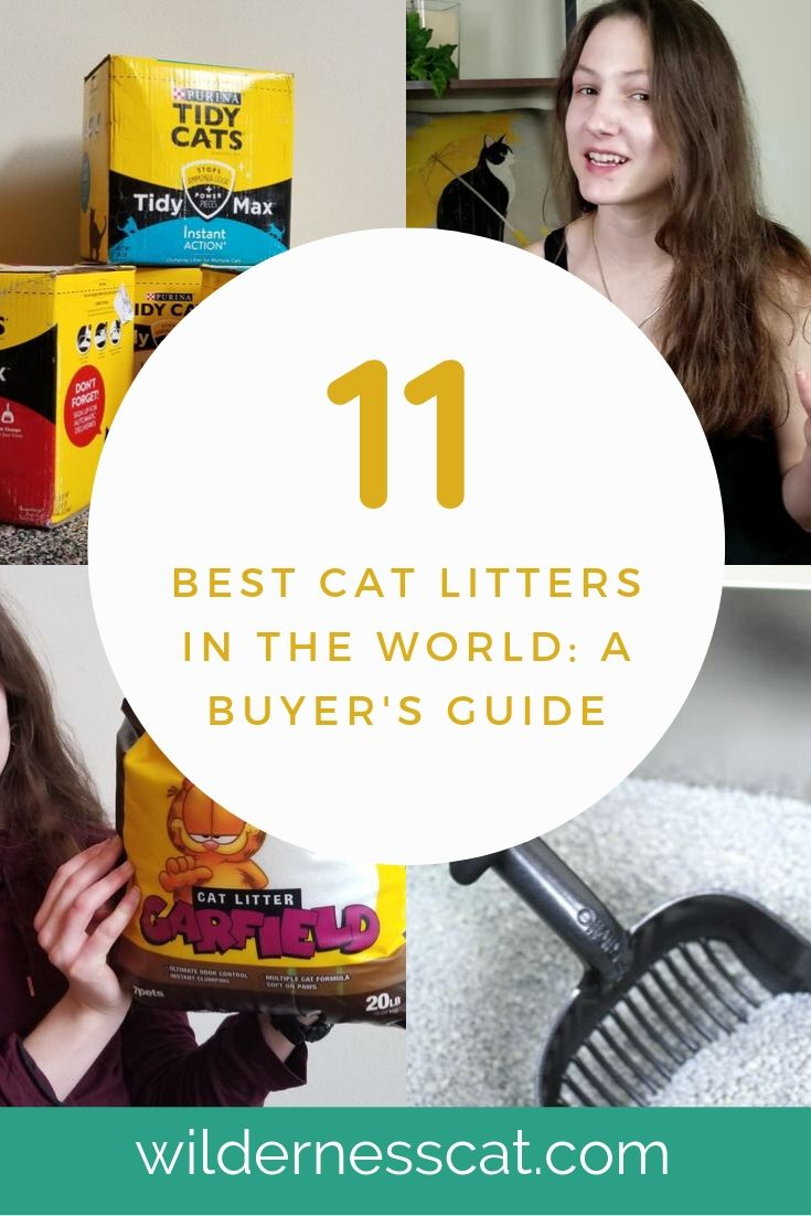 Best cat litter in the world pinnable graphic