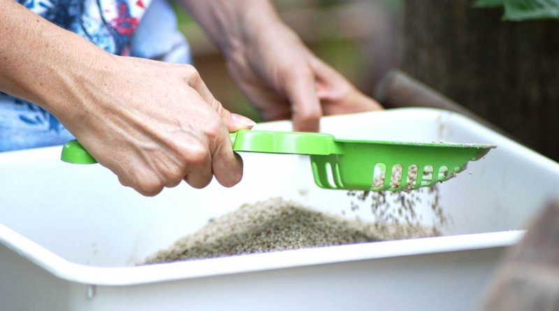 Best Cat Litter in the World - Person Scooping a Litter Box