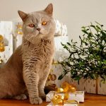 Christmas Gifts for Cats: 12 Gifts for Cats and Cat-Lovers in 2020