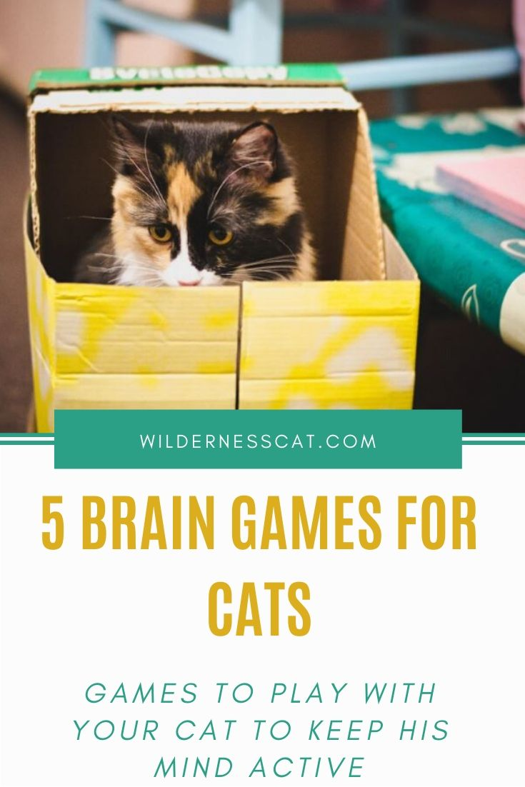 Best brain games for cats