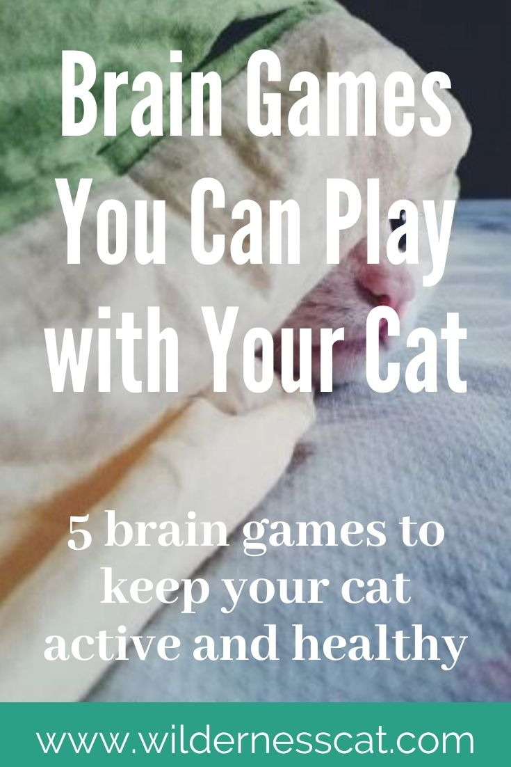 DIY games to play with your cat