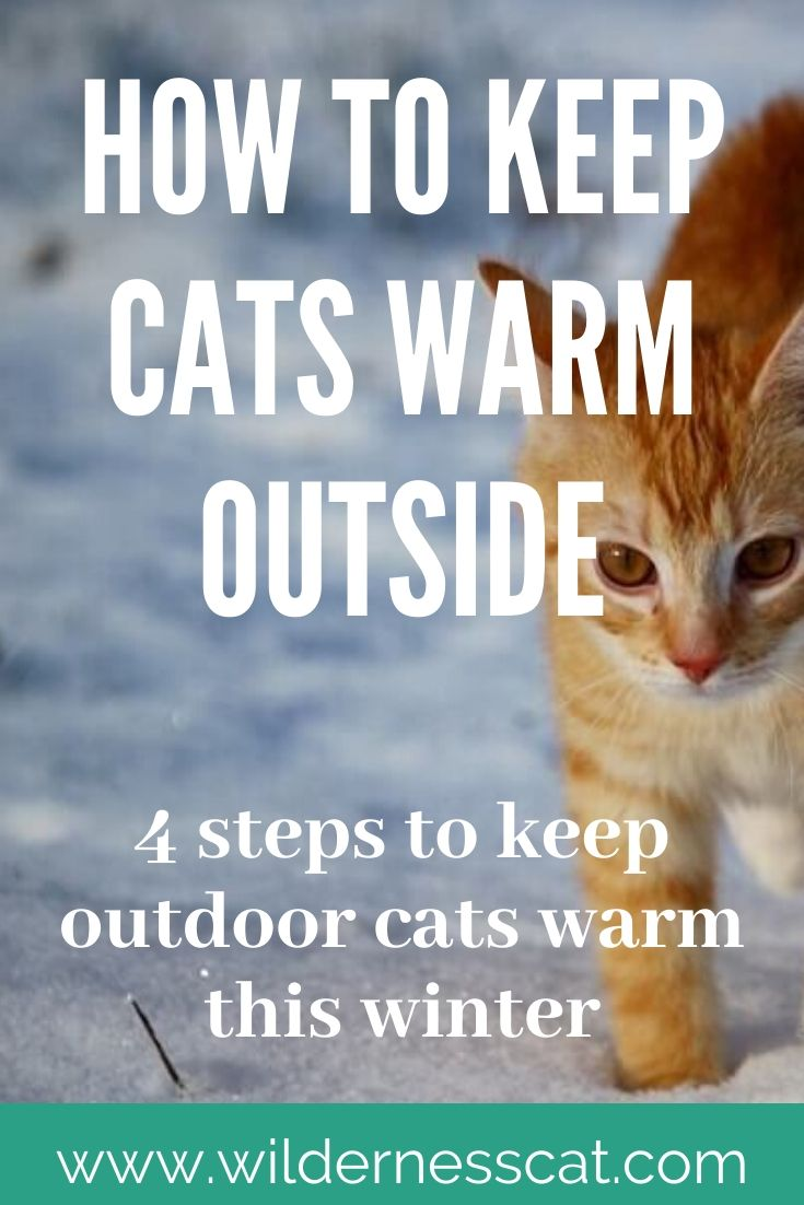 How to keep cats warm outside pin 2