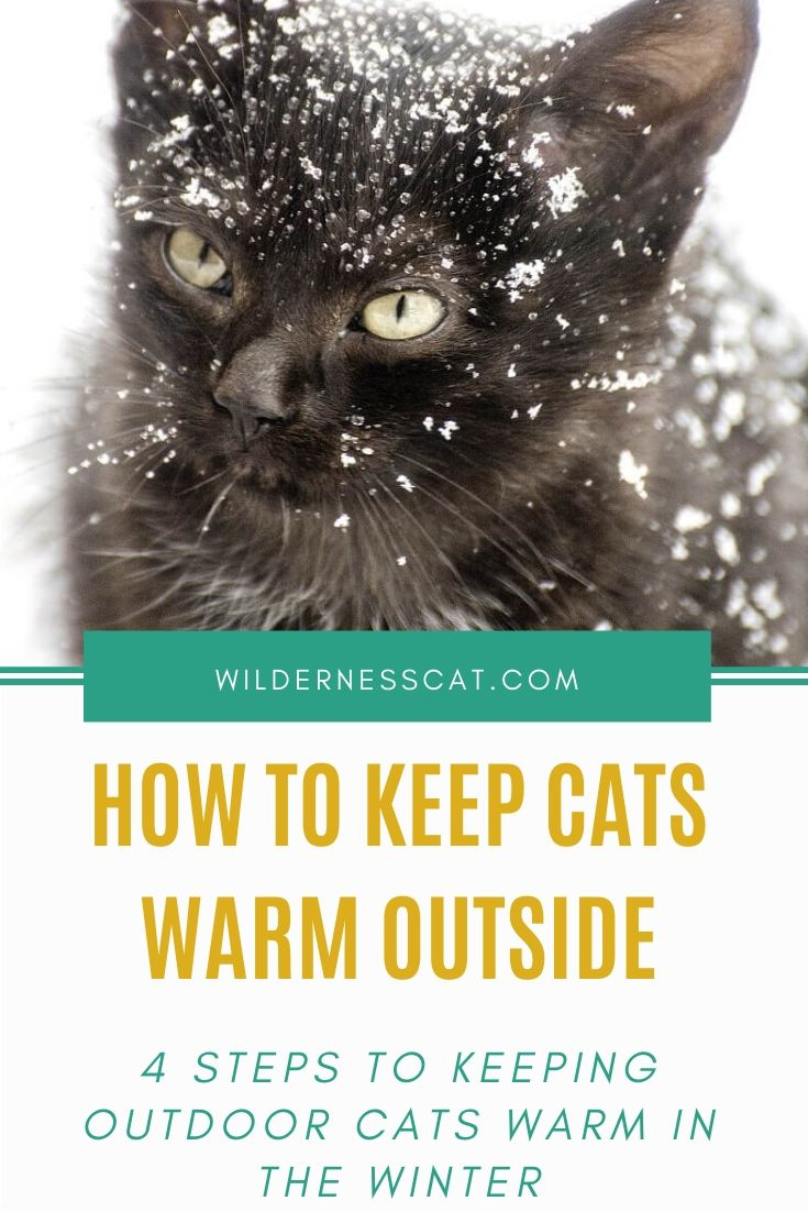 How to keep cats warm outside pin