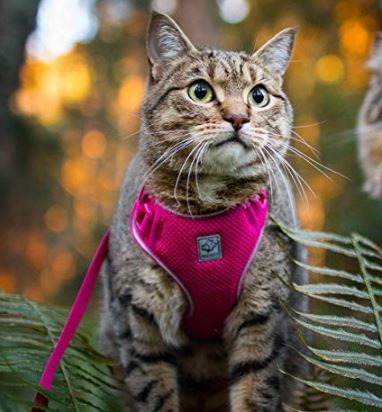 RC Pets adventure kitty harness