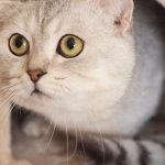 5 Brain Games You Can Play with Your Cat