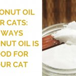 Coconut Oil for Cats: 3 Ways Coconut Oil is Good for Your Cat