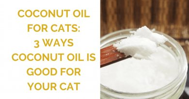 is coconut oil as good for cats