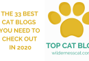 33 Best Cat Blogs You Need to Check Out in 2020