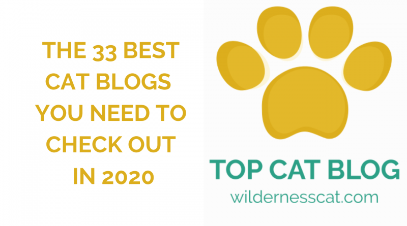 Best cat blogs cover photo