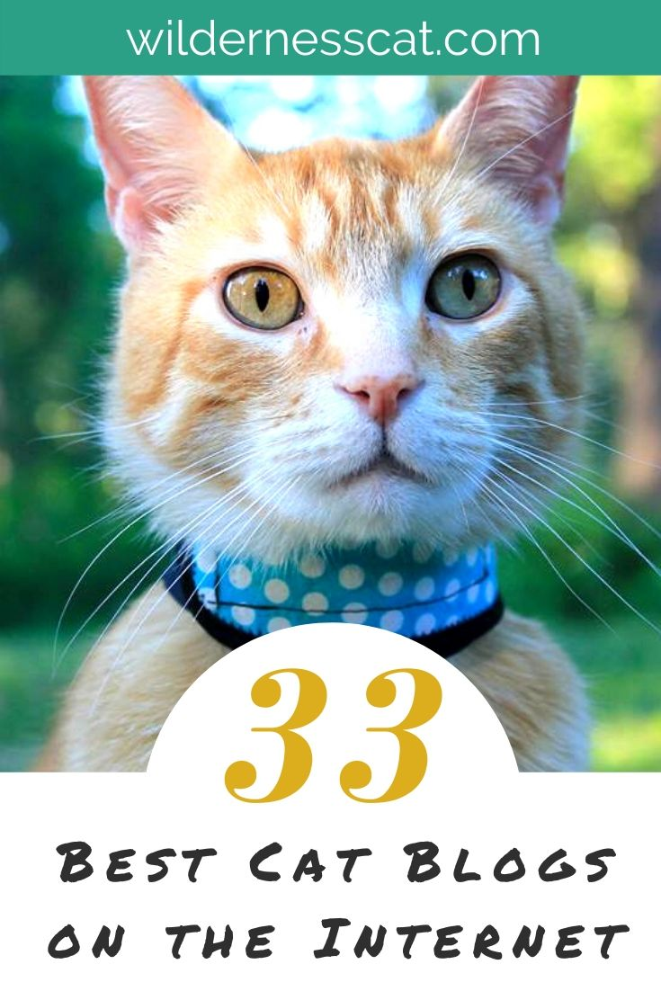 Best cat blogs pin 1