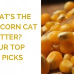 What's the Best Corn Cat Litter? Our Top 5 Picks for 2020