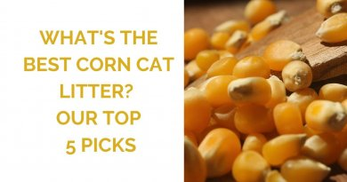 the best corn cat litter