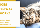 Does Feliway Work? The Facts About Feliway Feline Pheromone Spray