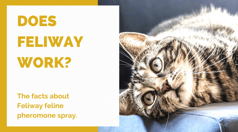 Does Feliway work for cats