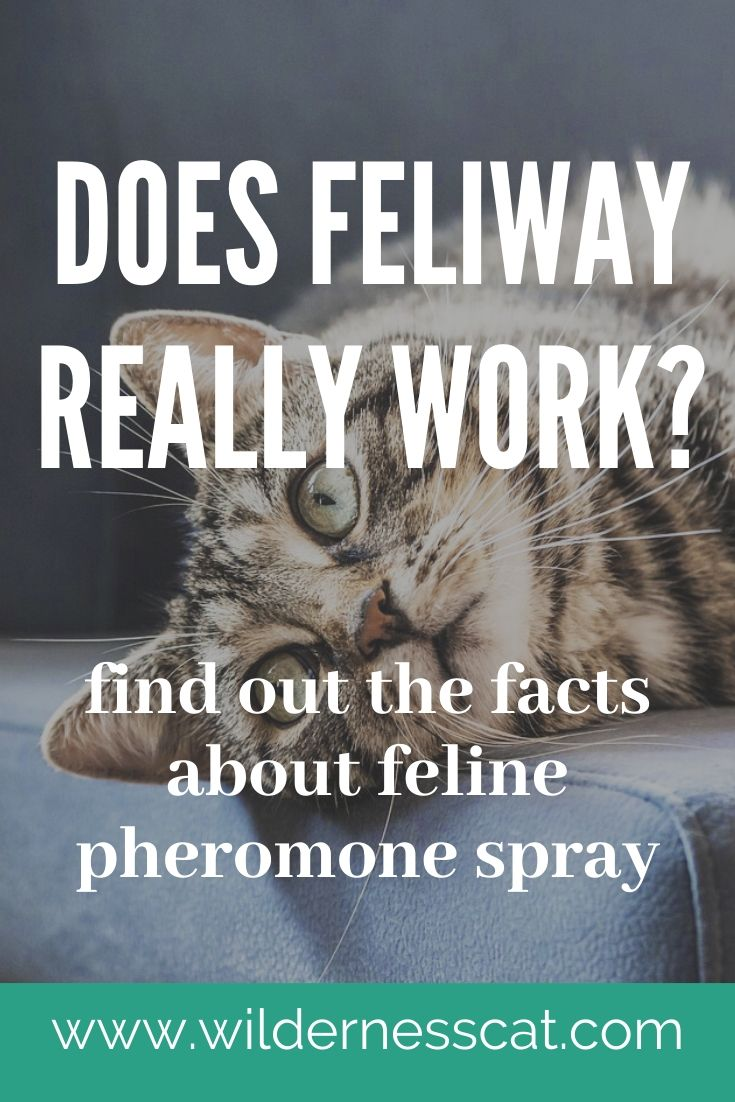 Does Feliway work pin 2