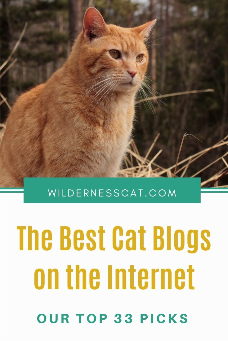 Best cat blogs pin 2