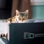 8 Ways We Take the Stress out of Traveling with Cats: How to Travel with Cats Stress-Free
