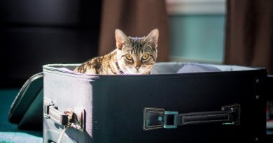 Traveling with cats without stress