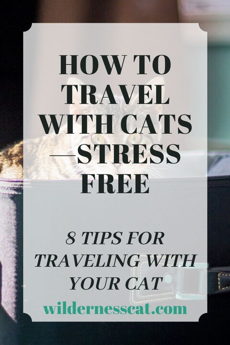 how to travel with cats stress free pin