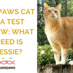 Basepaws Cat DNA Test Review: What Breed is Wessie?