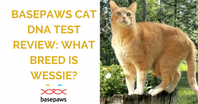 Wessie Basepaws DNA test feature