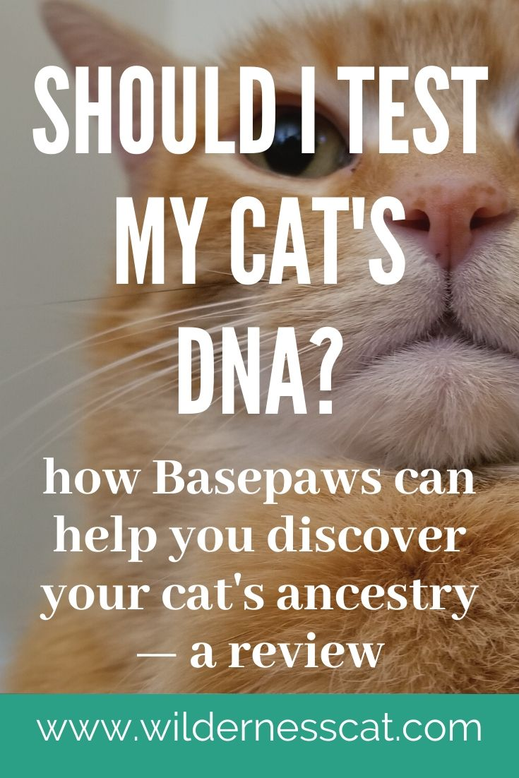 Basepaws cat DNA test review pin 2