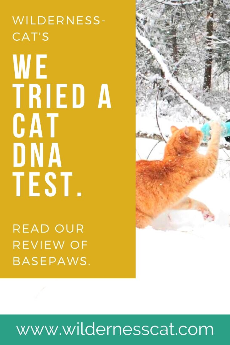 Basepaws cat DNA test review pin 1