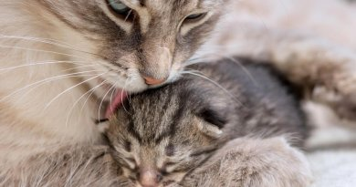 mother cat and newborn kitten