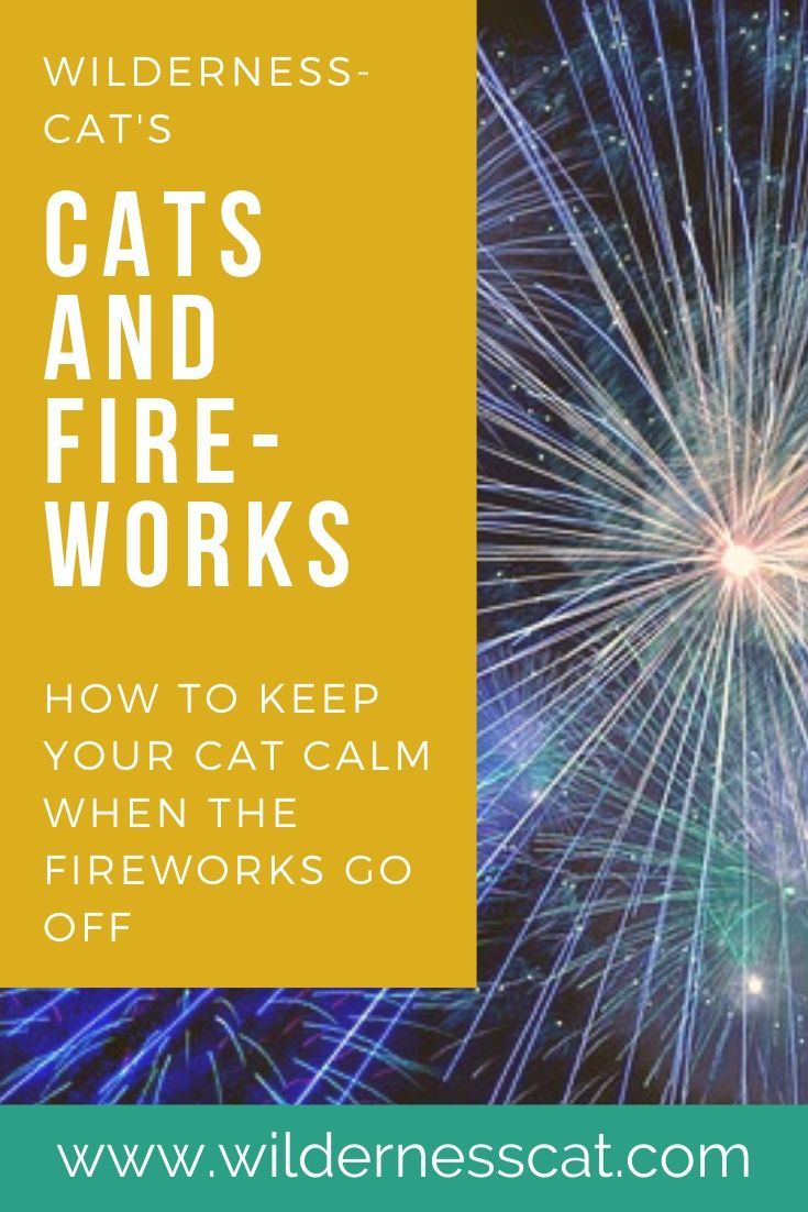 cats and fireworks pin 2