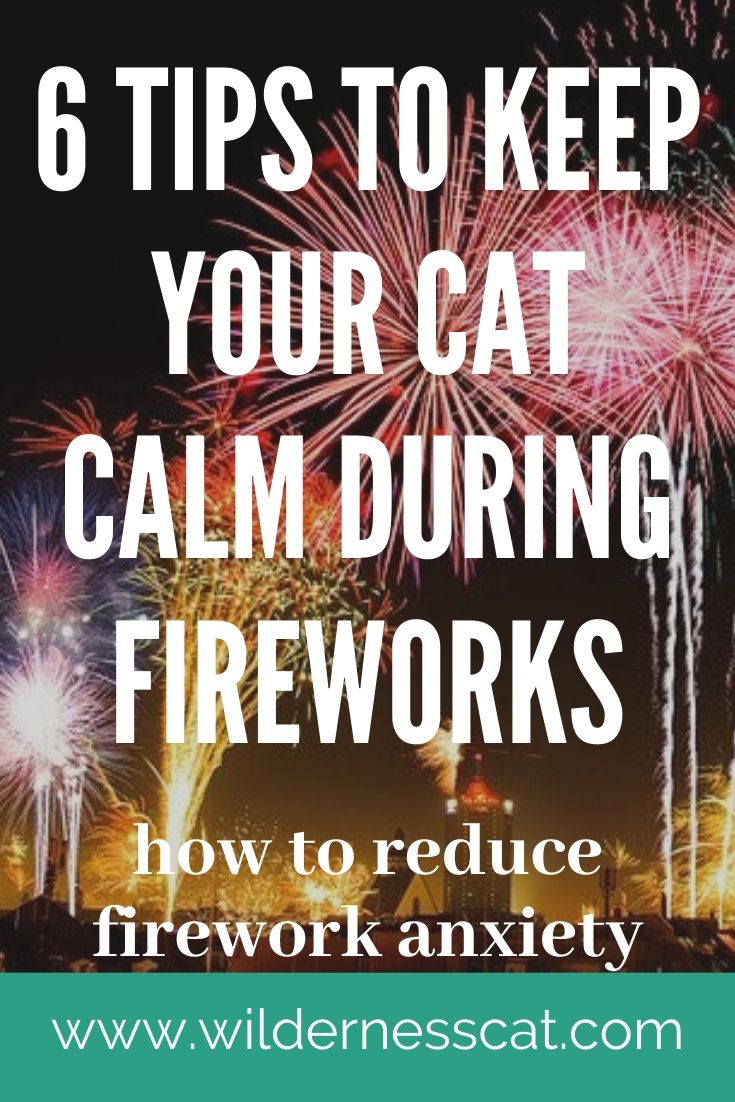 cats and fireworks pin 1