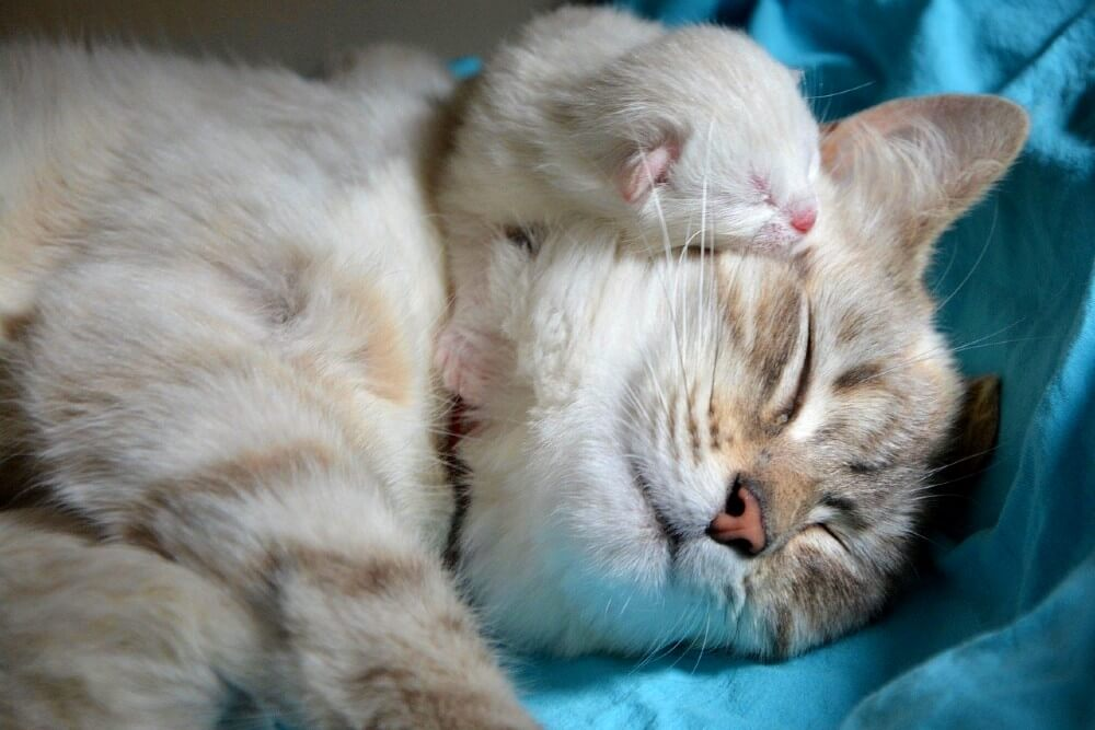 cat and newborn kitten