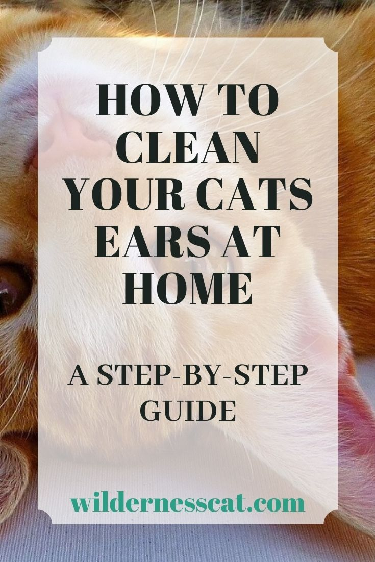 how to clean your cat's ears pin 1