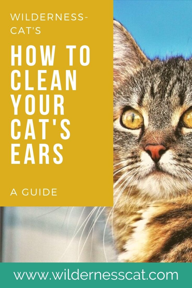 how to clean your cat's ears at home pin 2