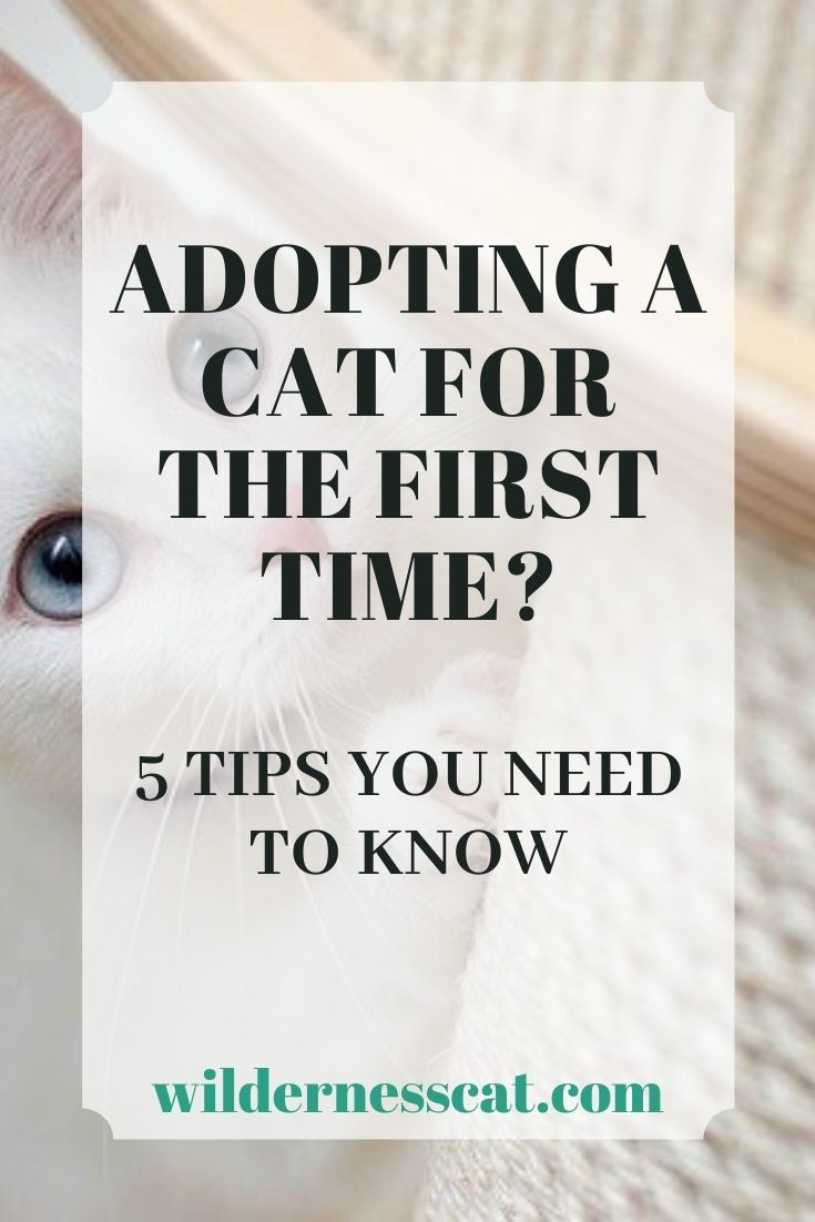 first time adopting cat pin 1
