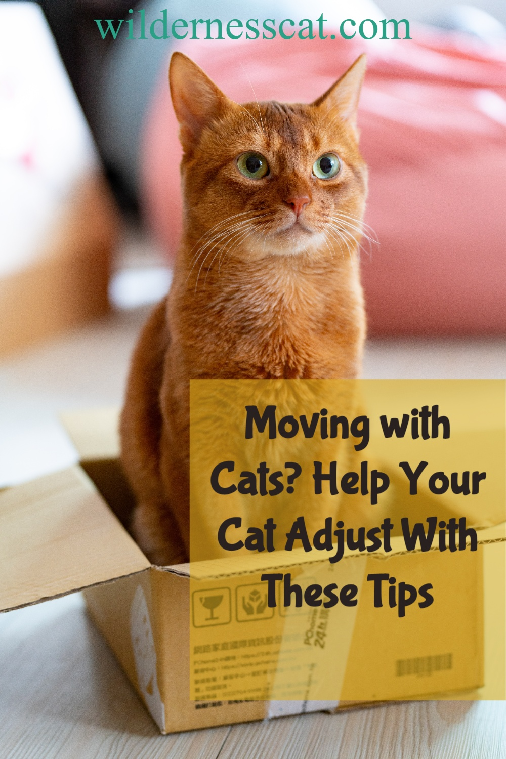 Moving with cats pin 1