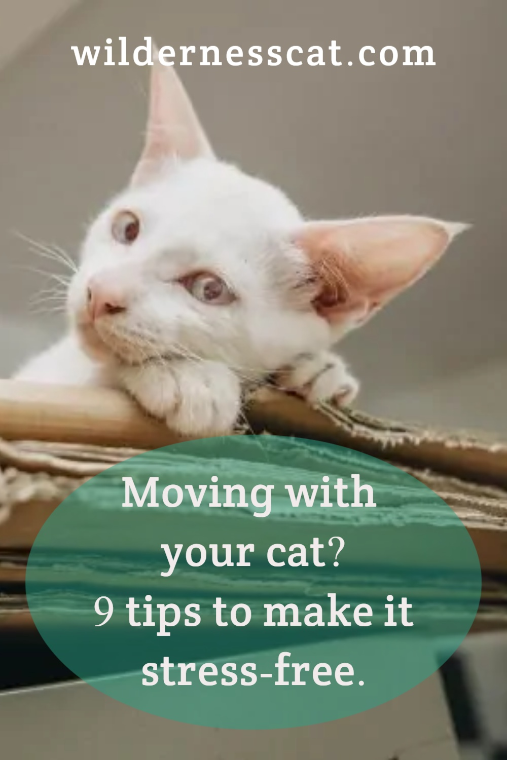 Moving with cats pin 2