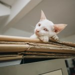 Moving Into a New Home? Help Your Cat Adjust With These Tips