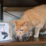 We Tried JustFoodForCats Fresh Cat Food: JustCats Review