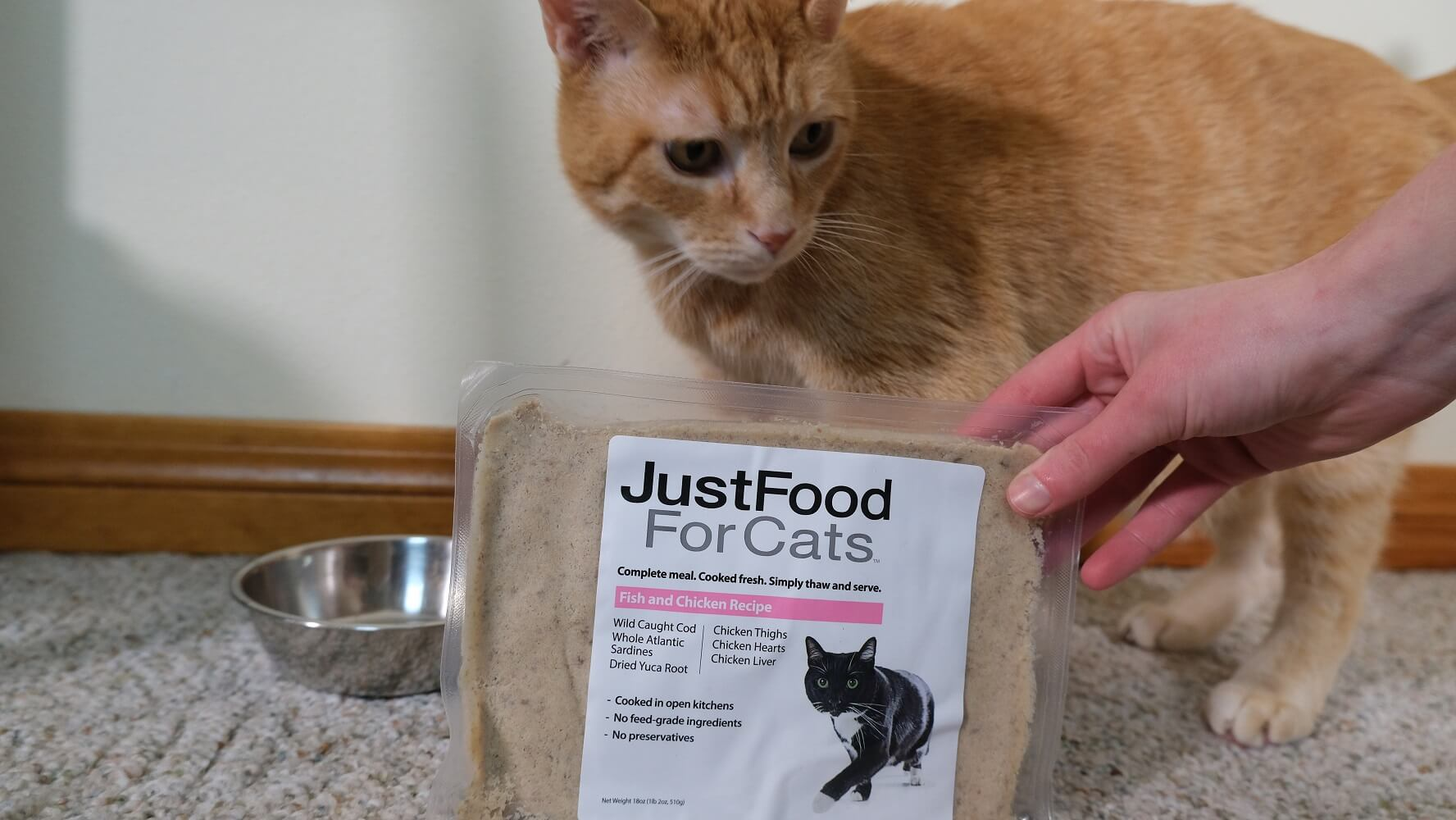 Just Food for Cats and Wessie